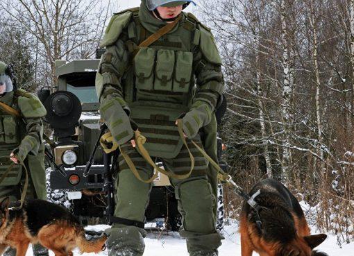 كيف تعمل الكلاب على ابطال مفعول الألغام في سوريا؟؟